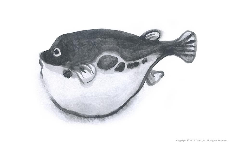 fugu_4